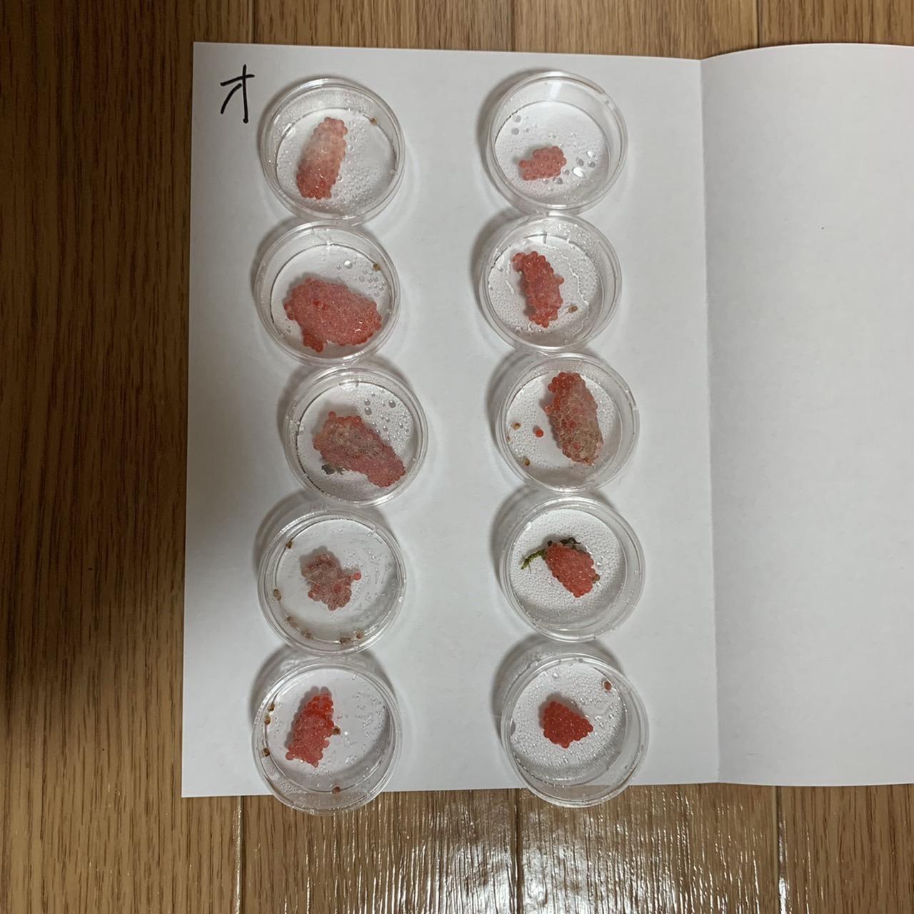 ジャンボタニシ卵 水噴霧